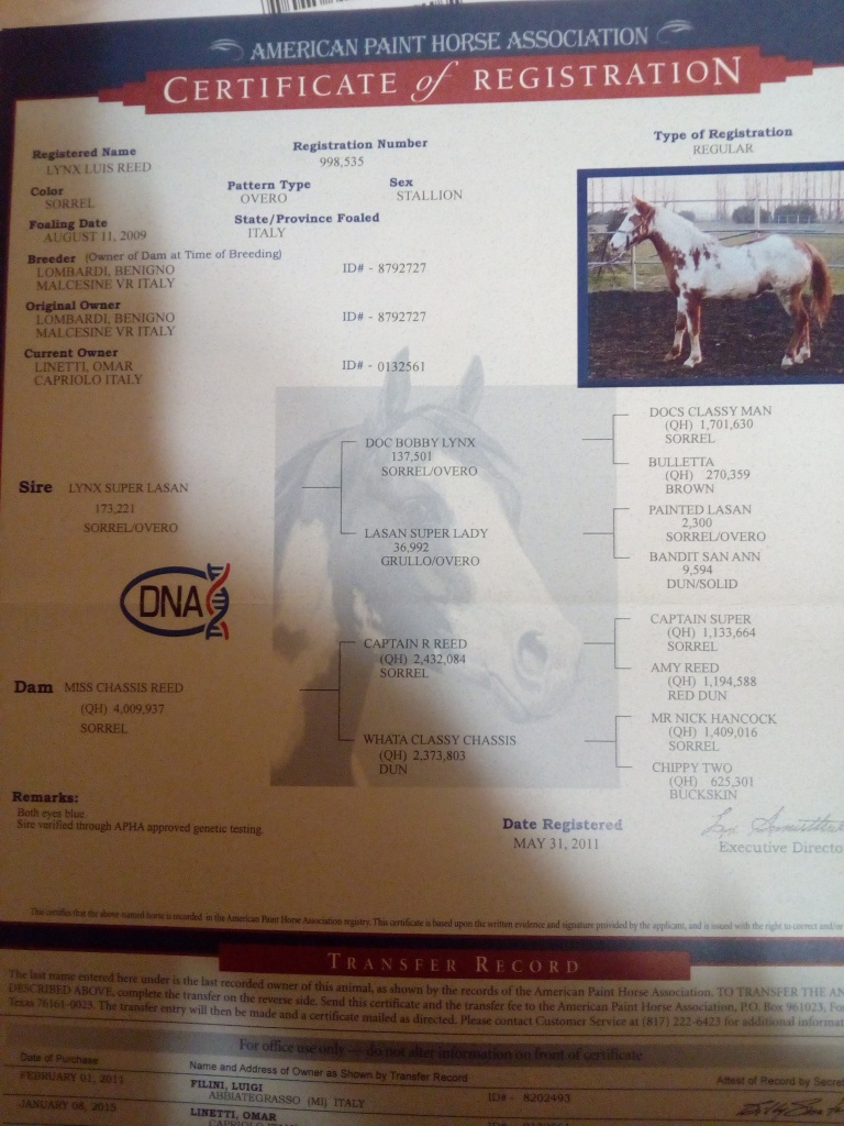 stallone paint horse Lynx Luis Reed certificato