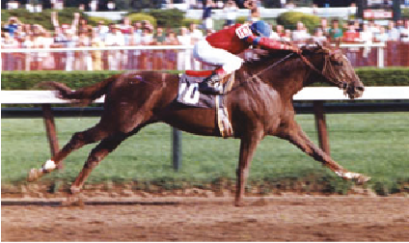 Speed index 100, $957,195 Legend of thoroughbred racing, Earned nearly a million dollars! The Blood-Horse magazine, the leading publication, ranked him 27th of the top 100 racehorses of the 20th century. He was inducted into thoroughbred racing's National Museum of Racing and Hall of Fame.