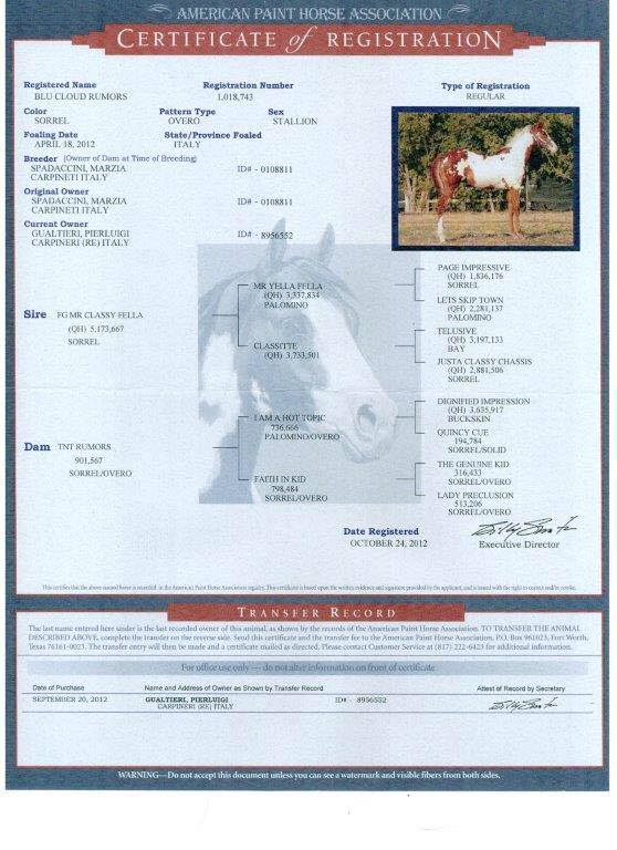 blu_cloud_rumors_stallion_paint_horse_overo_CERTIFICATO