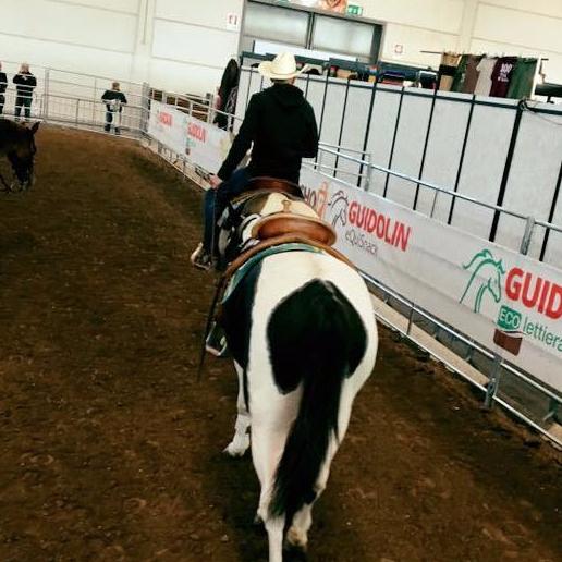 paint horses gimkana western