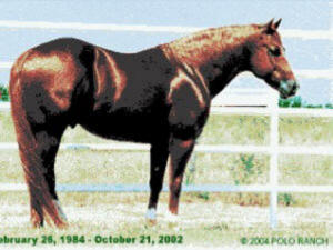 Grays-Starlight-Stallone-Quarter-Horse