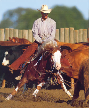Like-A-Diamond-Stallone-Paint-Horse