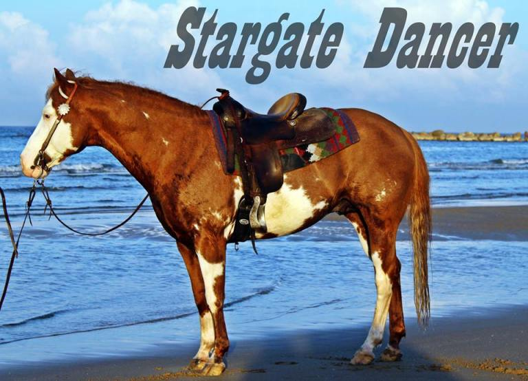 STARGATE-DANCER-Paint-Horse_Stallion-Breeding