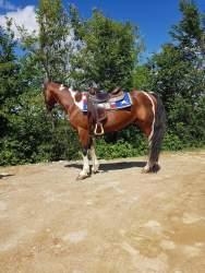 color-smart-thunder-paint-overo-stallion-1